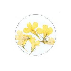Flores Secas Color-002