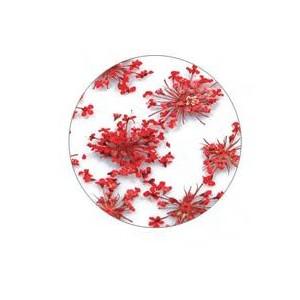 Flores Secas Color-005