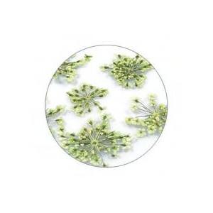 Flores Secas Color-009
